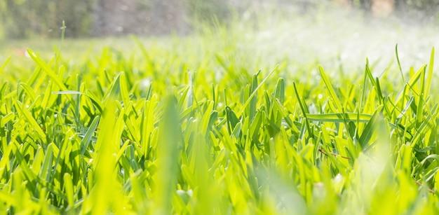 Water sprinkler spraying over green fresh grass