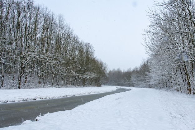 Water stream in the middle of snowy fields with trees covered in snow