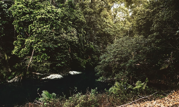 Water stream in the tropical jungle