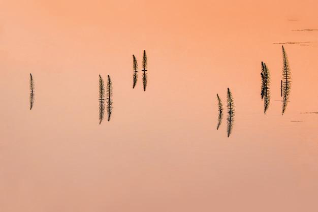 日没時の水面