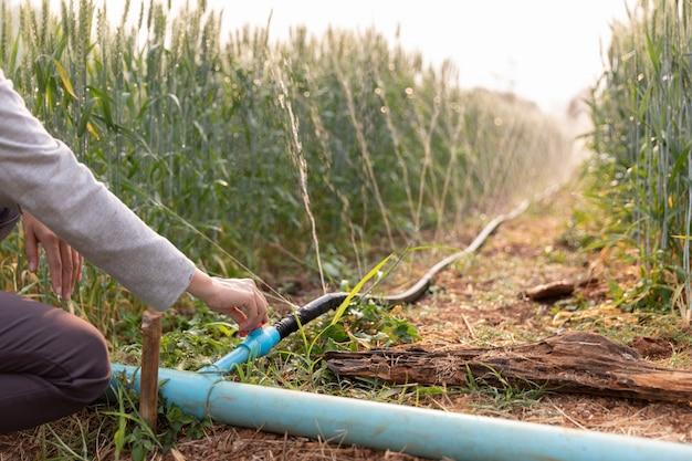 田んぼに水をまく水テープと農場の農業植物におけるシステムの水まき