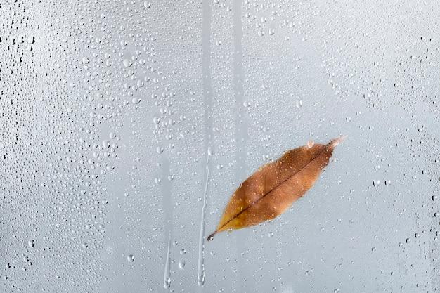 Fondo di struttura dell'acqua, foglia di autunno sulla finestra di vetro