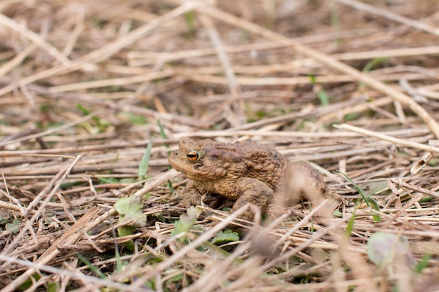 Water toad swamp on the floor