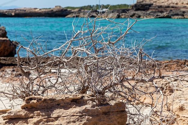 水は緑と流木で岩の多いビーチを洗います、岩の多いビーチの流木