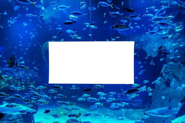 水族館に浮かぶ海の魚と水。