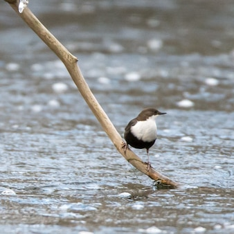 Waterbird perched on the branch of a tree