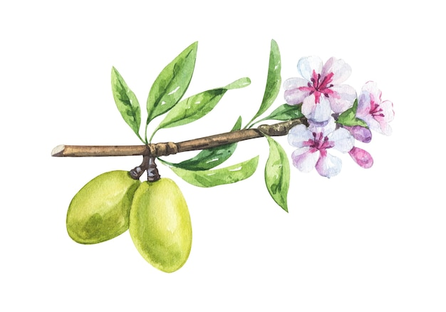 Watercolor almond branch with flower and leaves