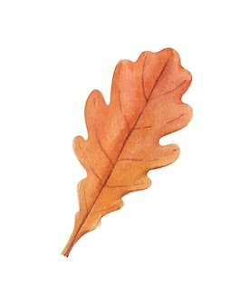 Watercolor autumn brown oak leaf