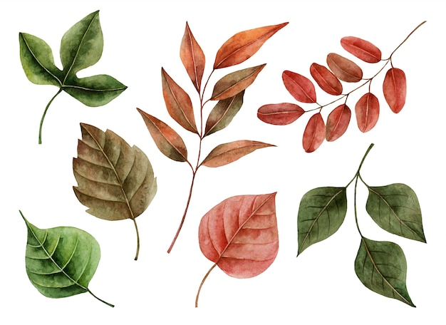 Watercolor autumn leaves, hand painted illustration of floral elements isolated on a white