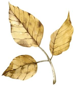 Акварель осенняя желтая ветвь с листьями, изолированными на белом фоне.