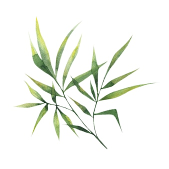 Watercolor bamboo leaves, bamboo branches, a single element on a white background.