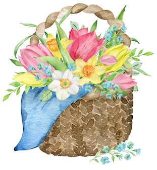 Watercolor basket with pink and yellow tulips, narcissuses and forget-me-not flowers. hand drawn vintage illustration isolated on the white