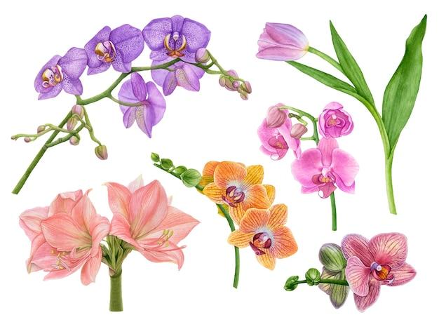 白の水彩画の美しい、エキゾチックな花