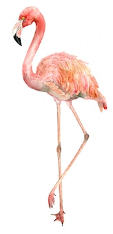 Watercolor bird flamingo