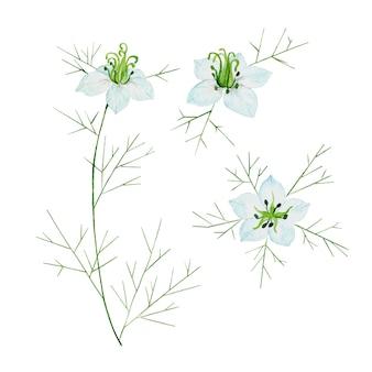 白い花と水彩の黒い種子クミン