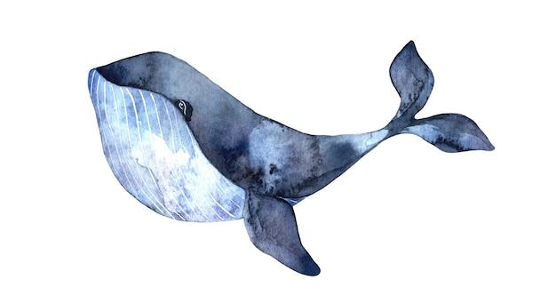 水彩の青い大きなクジラ、白い背景で隔離の手描きイラスト、リアルな水中動物。