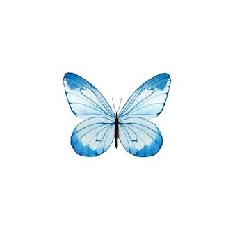 Акварель синяя бабочка