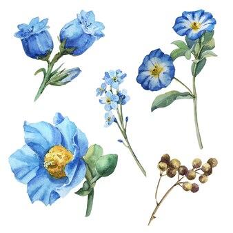 Акварель синий цветок с листьями, ирис, анемон, ветка