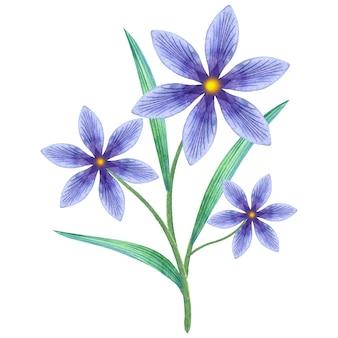 水彩の青い花