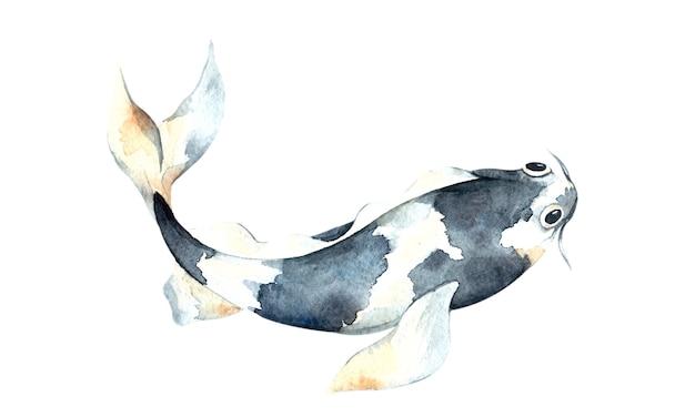 Watercolor blue koi, beautiful fish  isolated, watercolor illustration, hand drawing