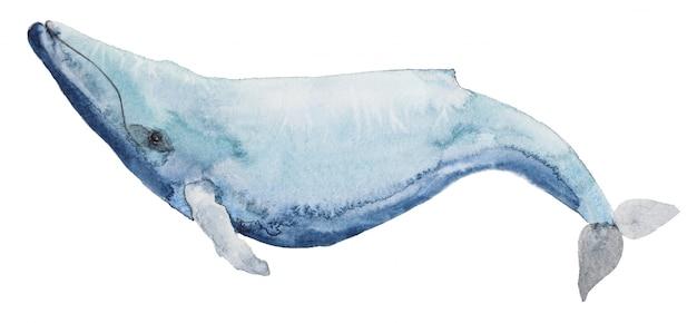 Watercolor blue whale
