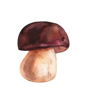 Watercolor boletus brown mushroom