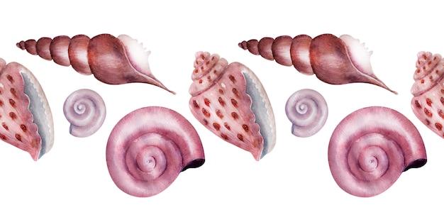 水彩ボーダー海の貝。ピンクのマザーオブパールシェル。
