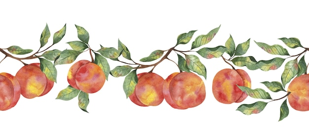 Watercolor border with fruit ripe peach with leaf branches on a white background