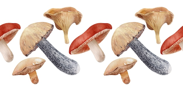 Watercolor borders with different kinds of mushrooms