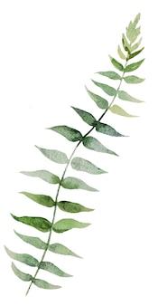 水彩植物緑の葉イラストセットイラスト分離
