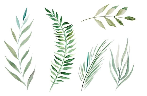 Watercolor botanical leaves illustration set illustration  isolated