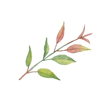 Watercolor branch with beautiful leaves. isolated