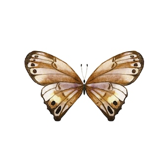 Watercolor brown butterfly.