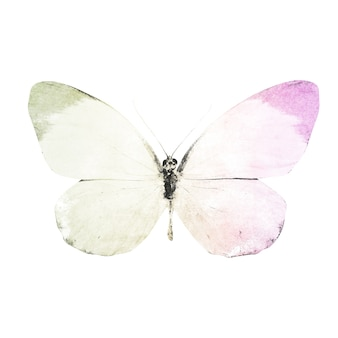 Watercolor butterflies isolated