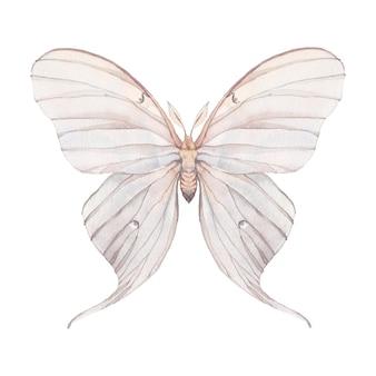 Акварельная бабочка. ручной обращается насекомых крупным планом на белом фоне. естественная иллюстрация мотылька tropaea luna