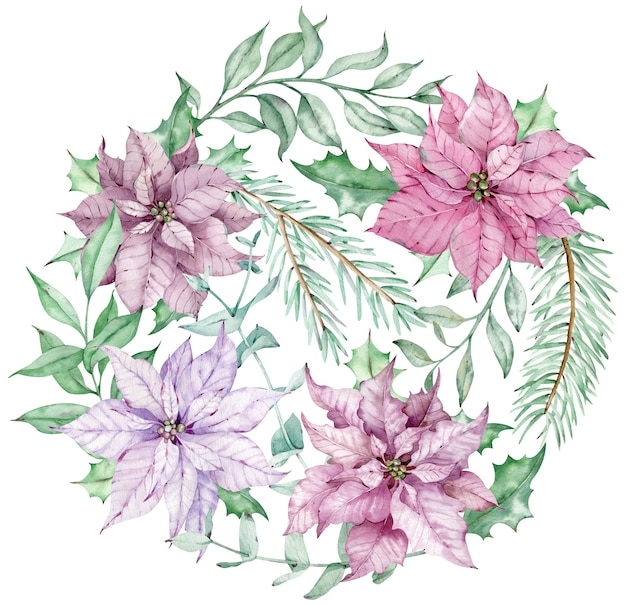 ピンクと紫のポインセチアの花、ユーカリ、松の枝が付いた水彩画のクリスマスサークルブーケ。白い背景で隔離の新年の冬のカード。