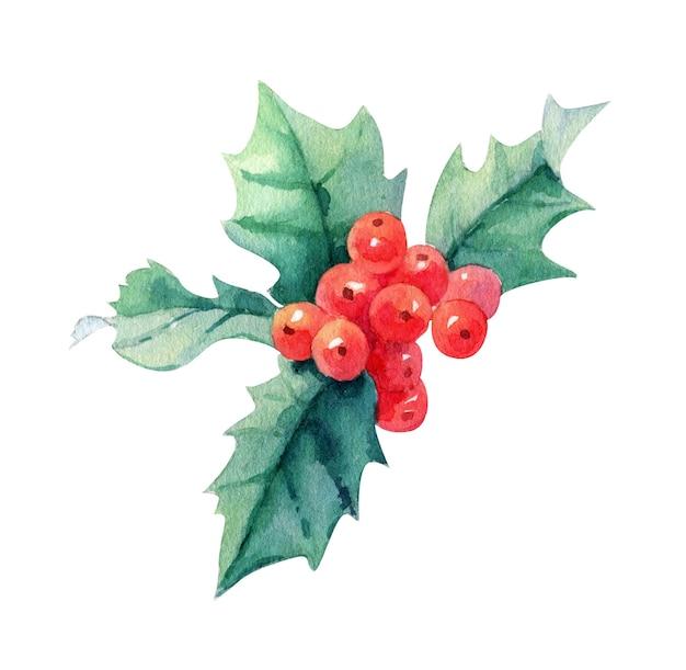 Акварель рождественские святые ягоды, изолированные на белом фоне