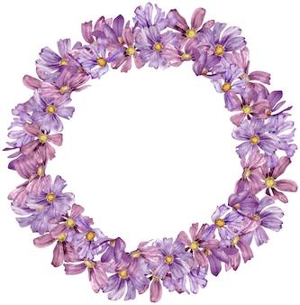 コピー スペースで白い背景に分離された紫のコスモスの花の水彩サークル フレーム