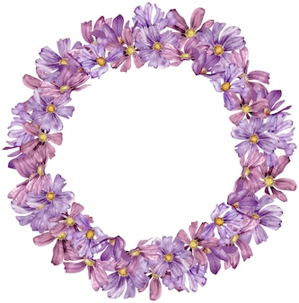 Watercolor circle frame with purple cosmos flowers isolated on white background with copy space