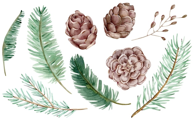 Watercolor clipart of cones and christmas tree branches for decoration. hand-drawn winter set isolated on the white background.