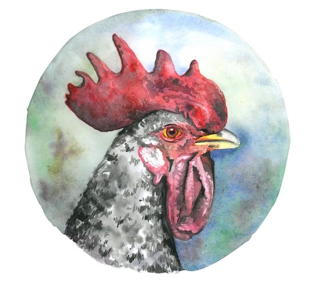 Watercolor cock