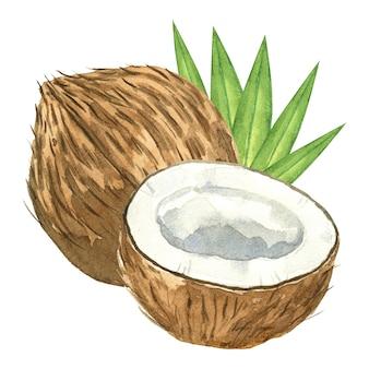 白で隔離の水彩ココナッツとヤシの葉