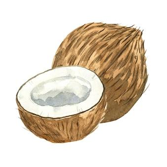 白で分離された水彩ココナッツ