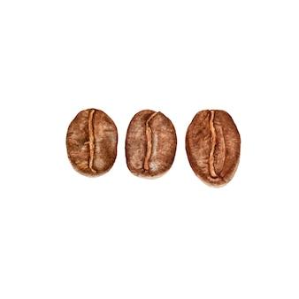 Акварельные кофейные зерна, изолированные на белой поверхности