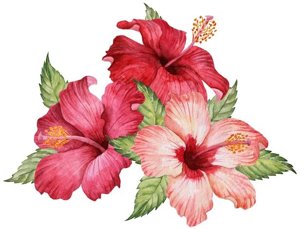 ハイビスカスの花と葉の水彩画の組成、手描きの花のイラスト、白で隔離されるエレガントなブーケ