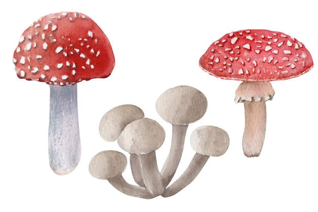 Watercolor composition with different kinds of mushrooms