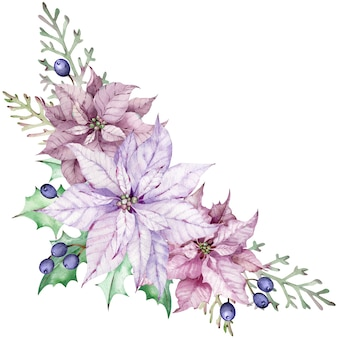 Watercolor corner poinsettia bouquet with blue berries, green leaves and juniper branches. winter floral arrangement. beautiful pink and violet flowers isolated on the white background.