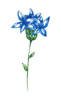 水彩のヤグルマギクのクリップアート白い植物画に分離された青い花のイラスト