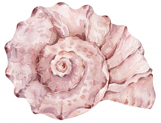 メニューやデザインの白い壁に分離された水彩のクリーミーなピンクの貝殻。手描きイラスト。