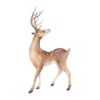 Акварельные иллюстрации оленей. изолированные животных силуэт на белом фоне.